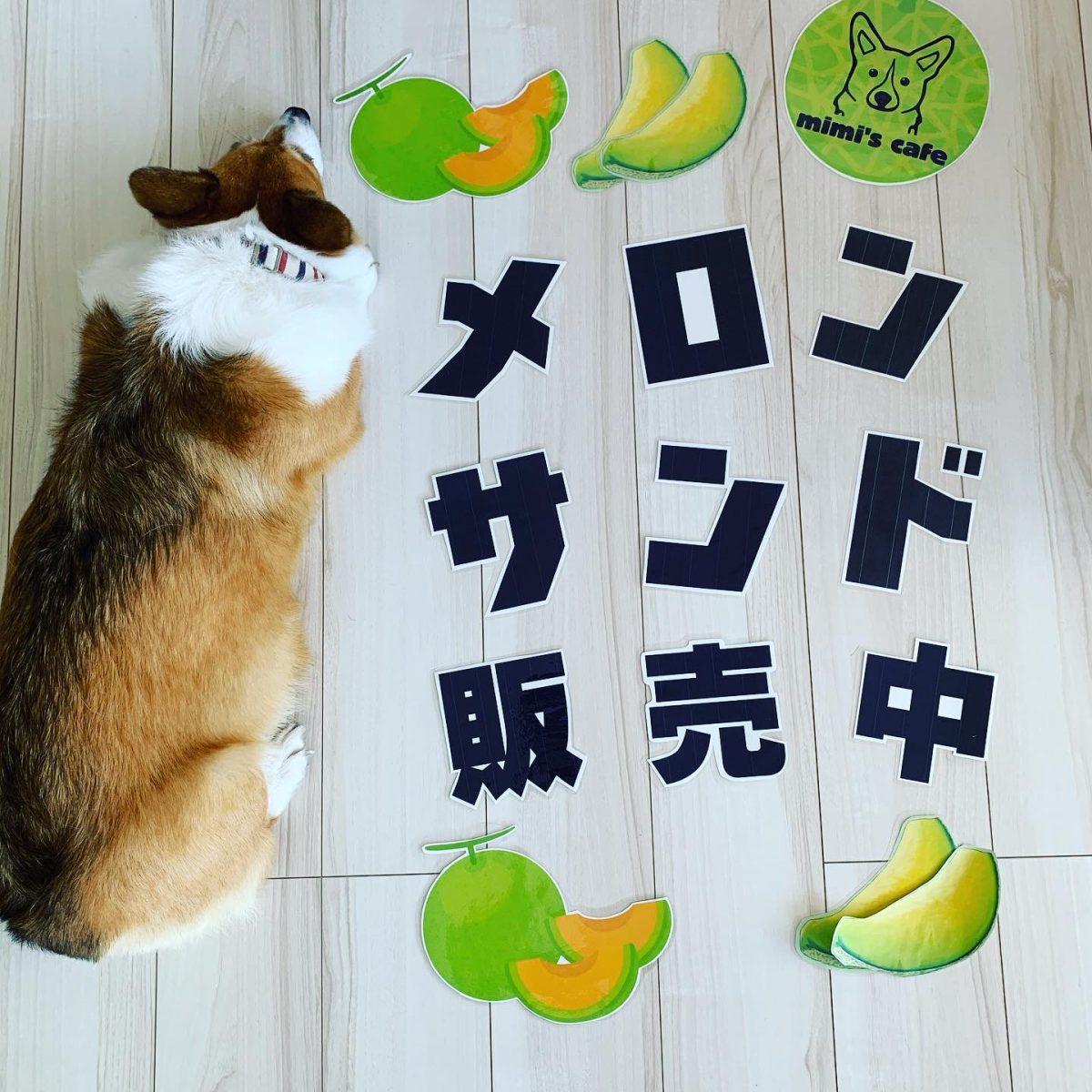 8月1日(土)日詰さんさん朝市開催‼️